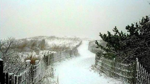 Winter Dunes by Leah Reynolds