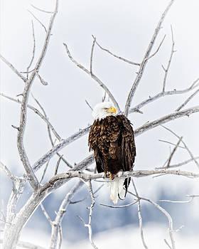 Winter Eagle by Jana Thompson