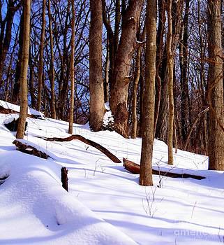 Winter Escape by Dani Stites