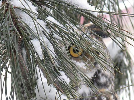Winter Eyes by Jody Benolken