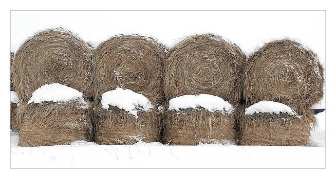 Winter Feed by Patrick Derickson