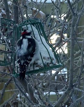 Winter Feeder by Will Logan