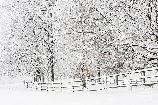 Oscar Gutierrez - Winter Fence