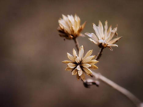 Winter Flower by Shannon Beck-Coatney