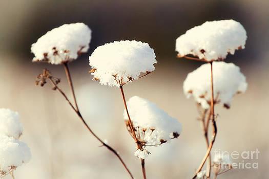Winter Flowers by Monika Wisniewska