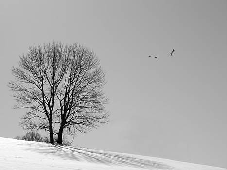 Richard Reeve - Winter - Fly Past in Mono