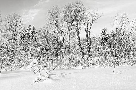 Elena Elisseeva - Winter forest landscape