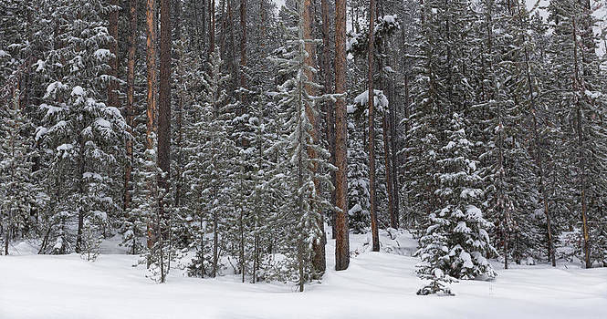 Nathan Mccreery - Winter Forest  Moran Wyoming