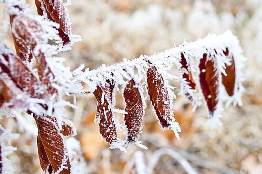 Winter Frost by James Davis