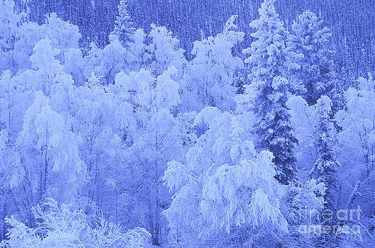 Mark Newman - Winter Frost