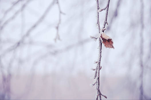 Winter Frost by Sabina  Horvat