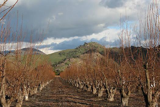 Winter Fruit Orchard by Marsha Ingrao