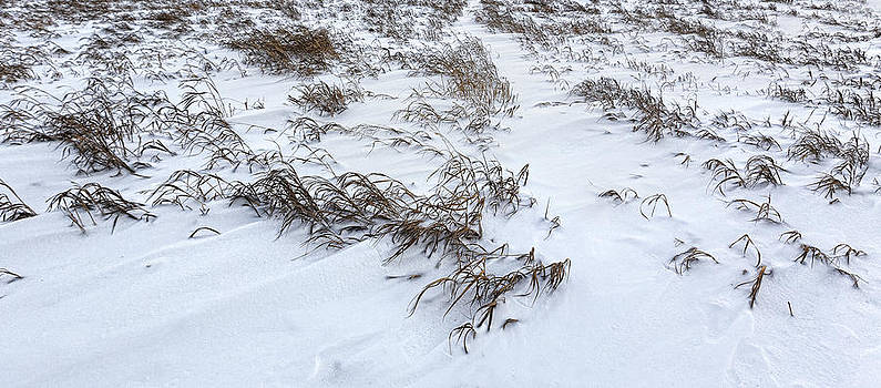 Nathan Mccreery - Winter Grasses  Snow