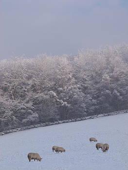 Winter Grazing 2 by Jennifer Watson