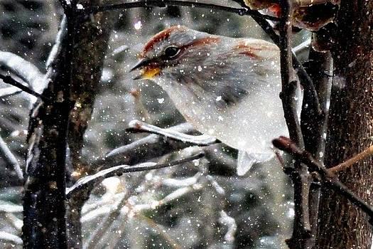 Mike Breau - Winter Greetings