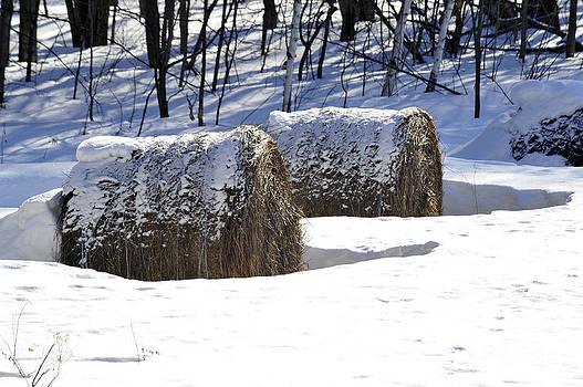 Elaine Mikkelstrup - Winter Hay