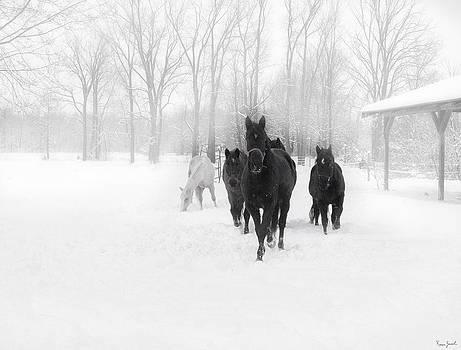 Winter Horses by Karen Varnas