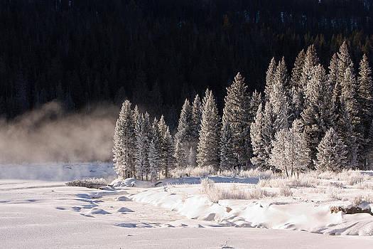 Winter in Lamar Valley by Jana Thompson