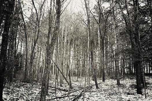 Winter In The Forest by Brin Schooley