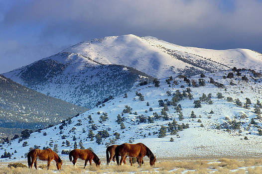 Winter In the High Desert  by Jeanne  Bencich-Nations