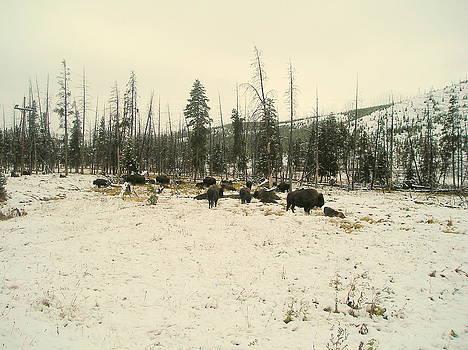 Winter in the Park by Johanna Elik