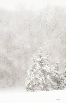 Winter in White  by Pat Edsall
