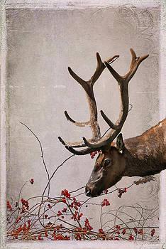 Julie Magers Soulen - Winter King