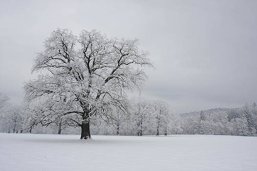 Winter Landscape by George Cislariu