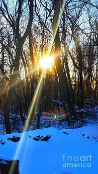 Winter Sunrise by Rose Wang