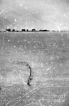 Sophie McAulay - Winter landscape