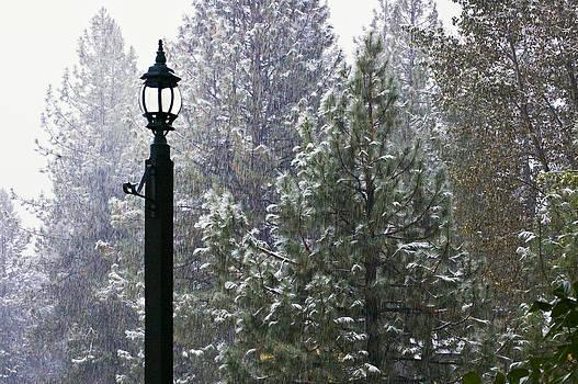 Mick Burkey - Winter Light
