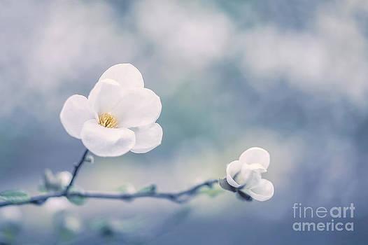 Winter Magnolia by Izabela Kaminska