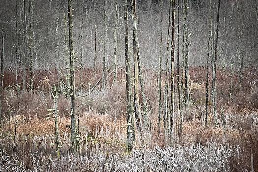 Ronda Broatch - Winter Marsh