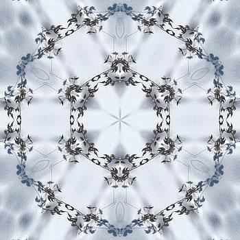Valerie Kirkwood - Winter Milkweed Kaleidoscope