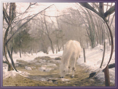 Winter Moments- With My Paso Fino Stallion by Patricia Keller