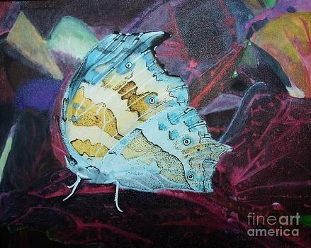 Winter Moth by Kaila Hernandez