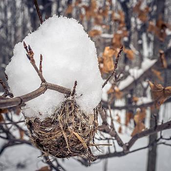 Chris Bordeleau - Winter nest