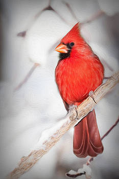 Winter Northern Cardinal by Jana Thompson