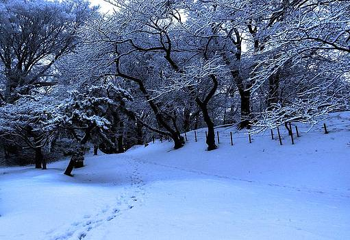 Winter not gone by Tim Ernst