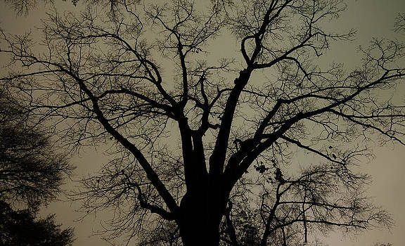 Alan Roberts - Winter Oak