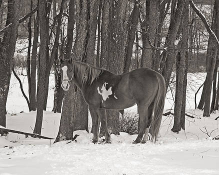 Winter on the Farm Black and White by Kristen Mohr