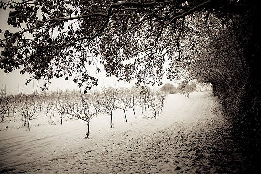 Winter Orchard by Dawn Bowery