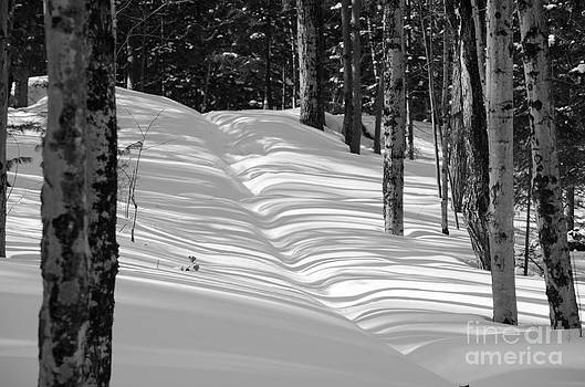Winter Path BW by Tiffany Rantanen