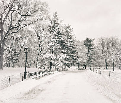 Winter Path - Snow Covered Trees in Central Park by Vivienne Gucwa