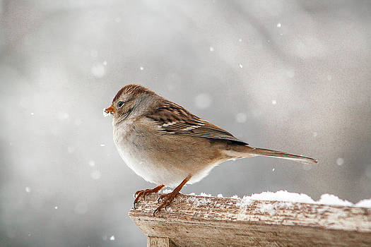 Winter Perch by Dawn Romine