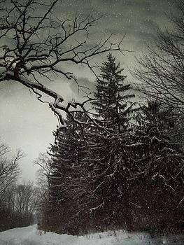 Winter Pines by Sue Midlock