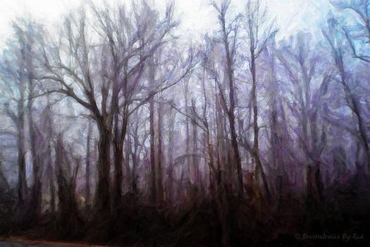 Winter Rain by Melody McBride