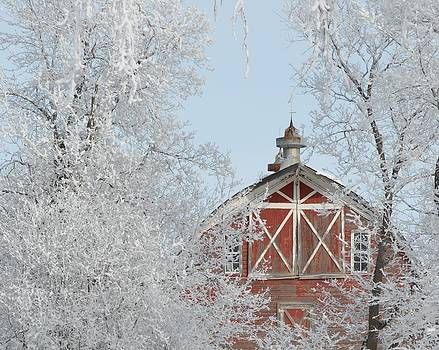 Winter Red by Betsy Armour