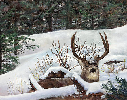 Winter Rest by Karen Cade