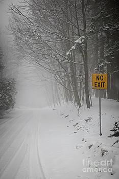 Elena Elisseeva - Winter road during snowfall I